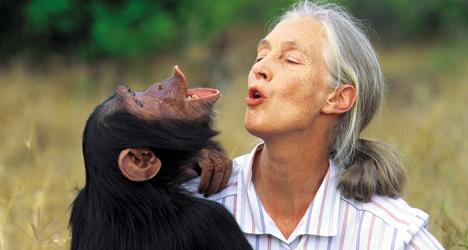 Jane Goodall – Chimpanzee